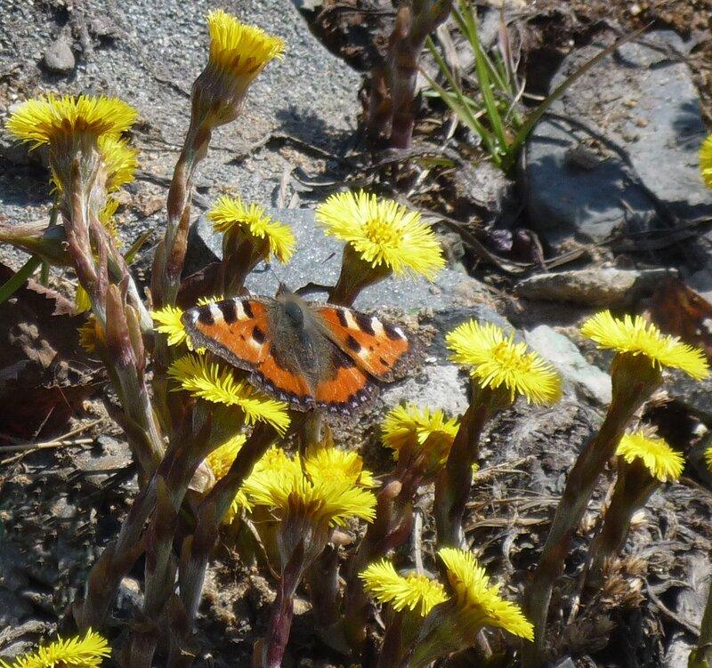 Первая бабочка.