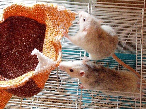 Как сделать игрушку для крыс 161