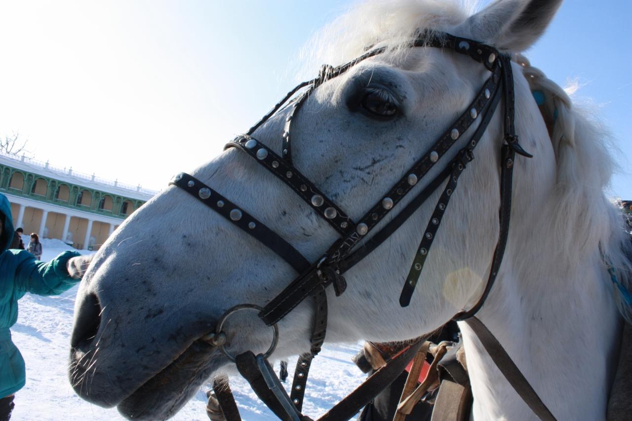 Портрет лошади.