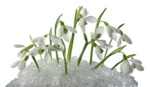 Snowdrops_Snowdrops3_Scrap and Tubes.png