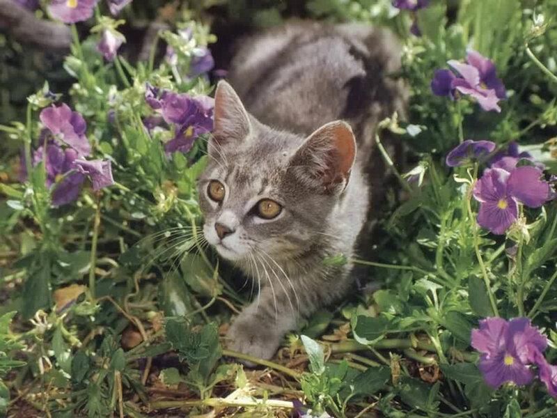 Кошки  0_52936_9755b027_XL