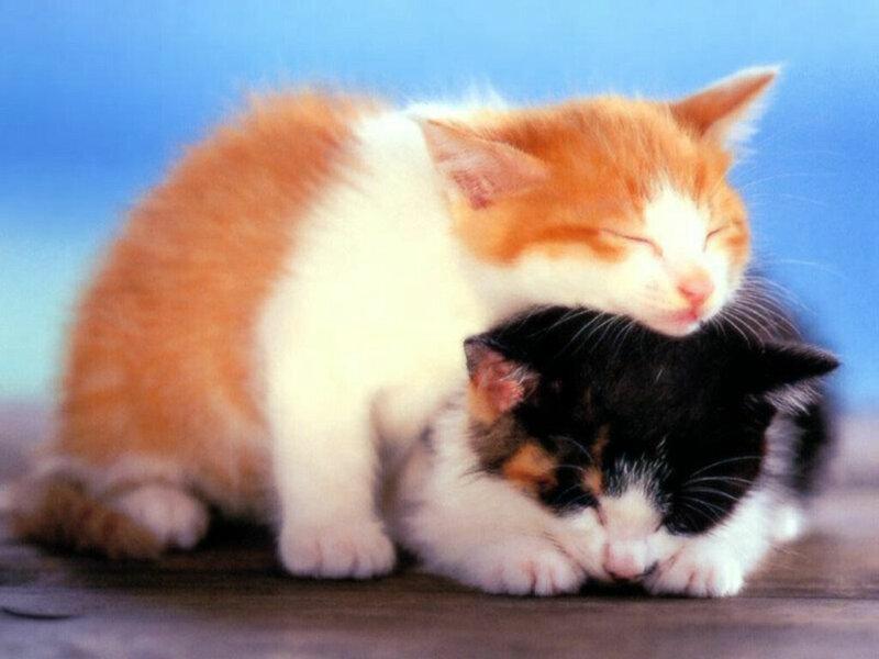 Кошки  0_5293e_e6d8ef47_XL