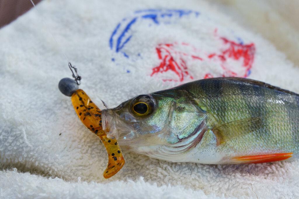 Изображение 1 : В попытках понять рыбу