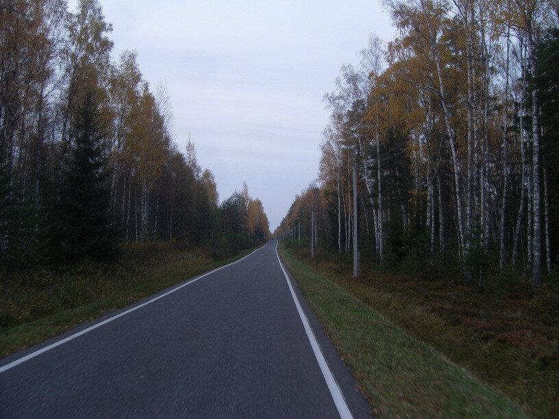 дорожки в Завидовском заповеднике