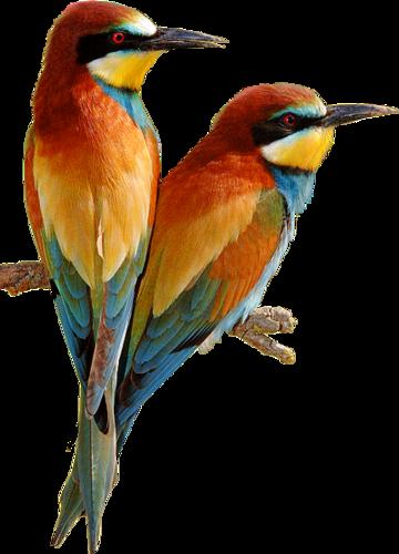 Ptice..... 0_dac76_27ebb9a6_L