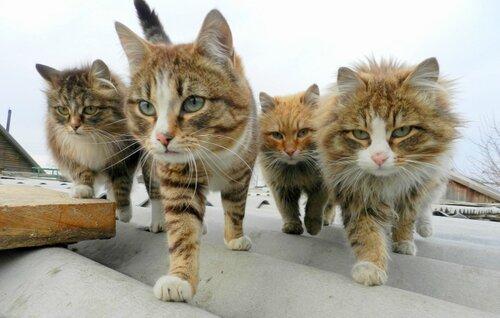 Что должна уметь каждая кошка.  Trackback.  Это разборка.