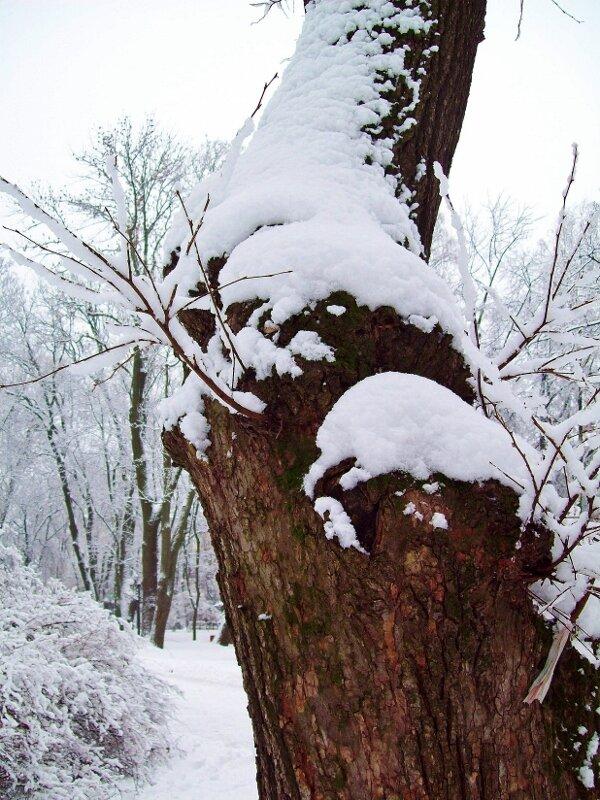 Дерево под снегом