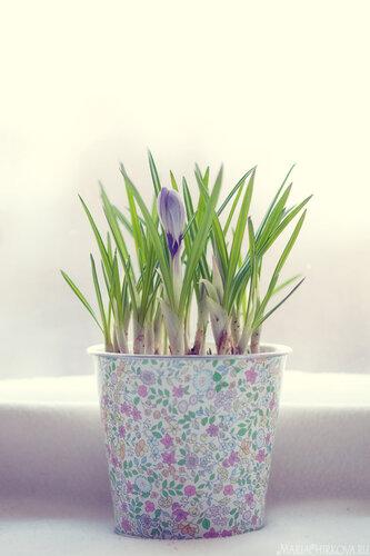 В предвкушении весны:)