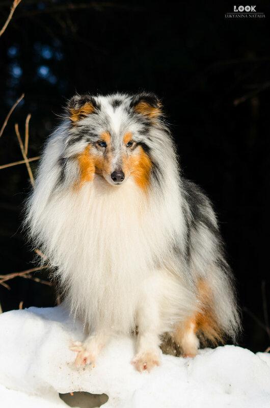 Мои собаки: Зена и Шива и их друзья весты - Страница 9 0_a8442_df1787f5_XL
