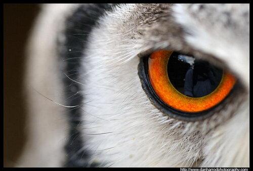 Интересные факты о совах
