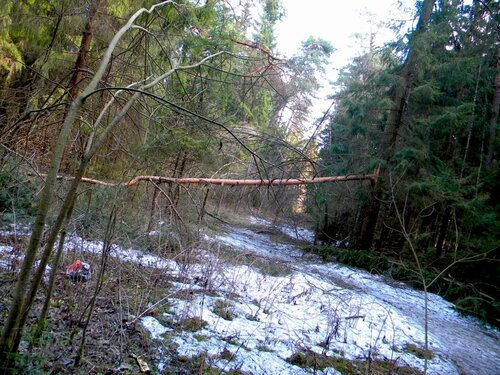 В лесу*