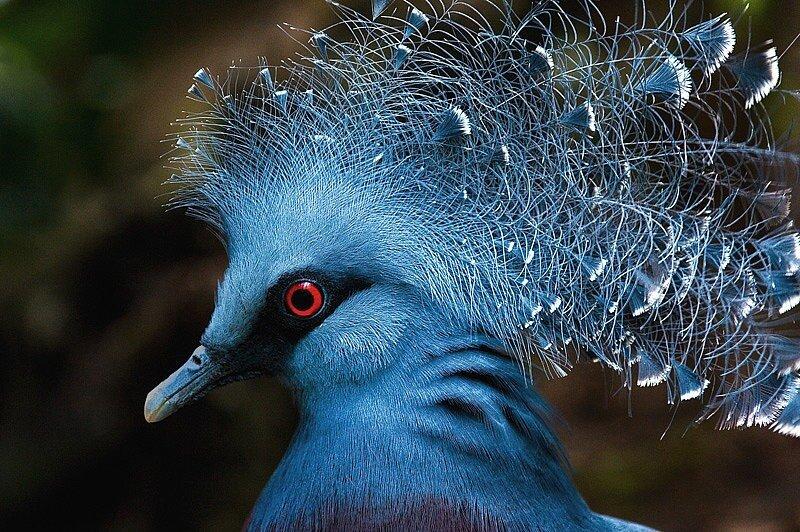 ...леса, в которых эти птицы большую часть времени проводят на земле.