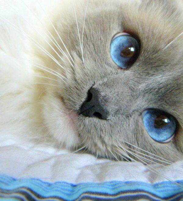 картинки кошачьи глаза
