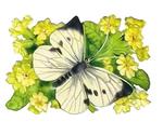 бабочки,Butterflies