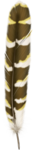 feather06.png