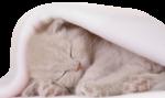 Кошки 5 0_50a19_b7a722fe_S