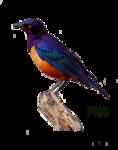 Птицы  разные  0_51c50_92bc2682_S
