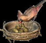 Птицы  разные  0_51ca3_32c19b2d_S