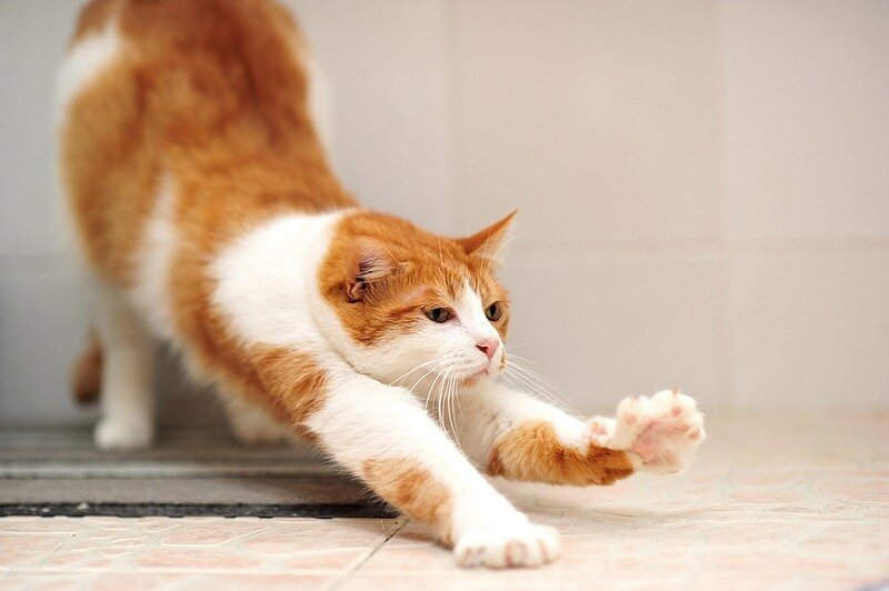 Кошки  0_5290c_1859e09e_XL