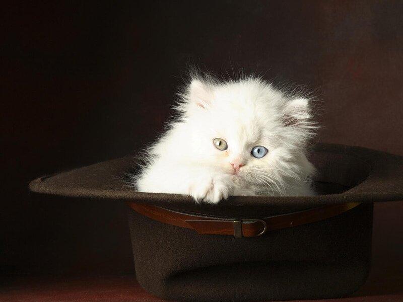 Кошки  0_52956_cc23c784_XL