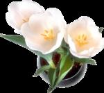 Домашние цветы 4