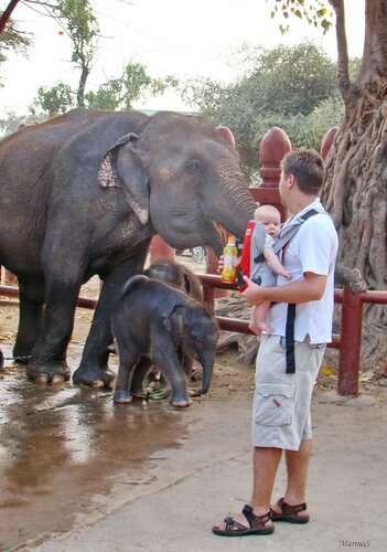 Три очаровательных слонёнка
