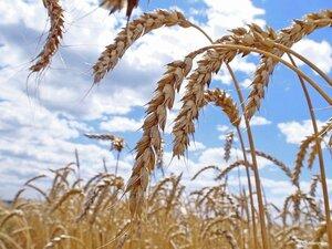 В Приморье представят новое оборудование для переработки зерна