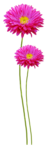 sekadadesigns_pinkflowers_element(40)