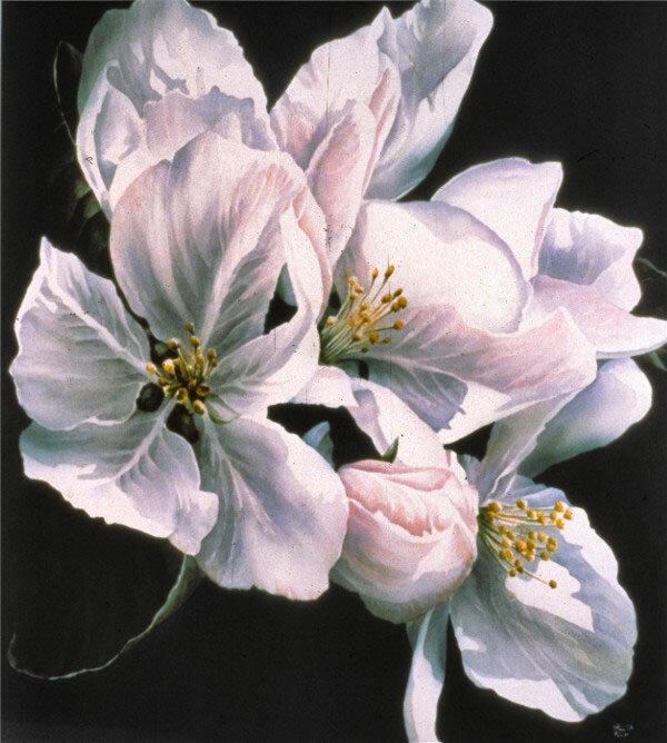Найден по ссылке: Доставка цветов дешево в Самаре.  Запродажа расцветок, близких и синтетических яичек, опись жигули.