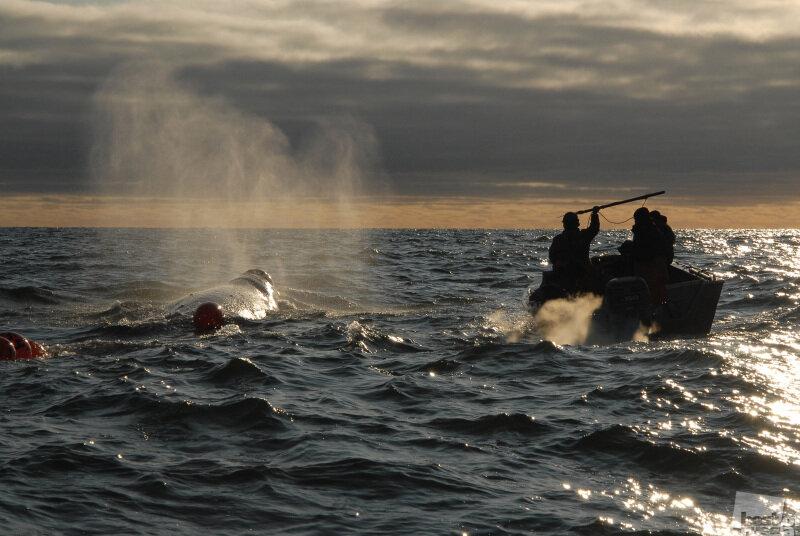 Охота на кита. Автор Андрей Шапран.jpg