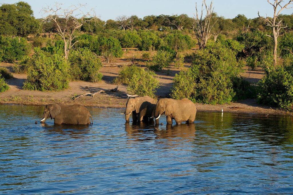 настолько путешествия ботсвана фото фото картины найденной