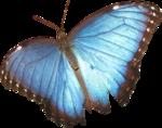 JenU_Butterfly.png