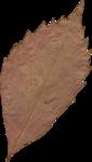JenU_Leaf2.png