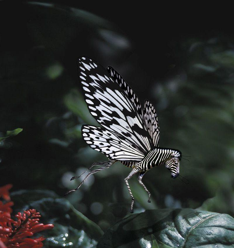 Животные-гибриды