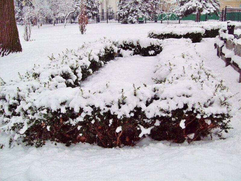 Декоративный кустарник в Мариинском парке