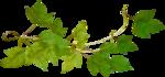 """Шикарный летний скрап-набор..""""Зеленая симфония"""" 0_752bc_7aaf9753_S"""