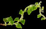 """Шикарный летний скрап-набор..""""Зеленая симфония"""" 0_752c3_abfc246e_S"""