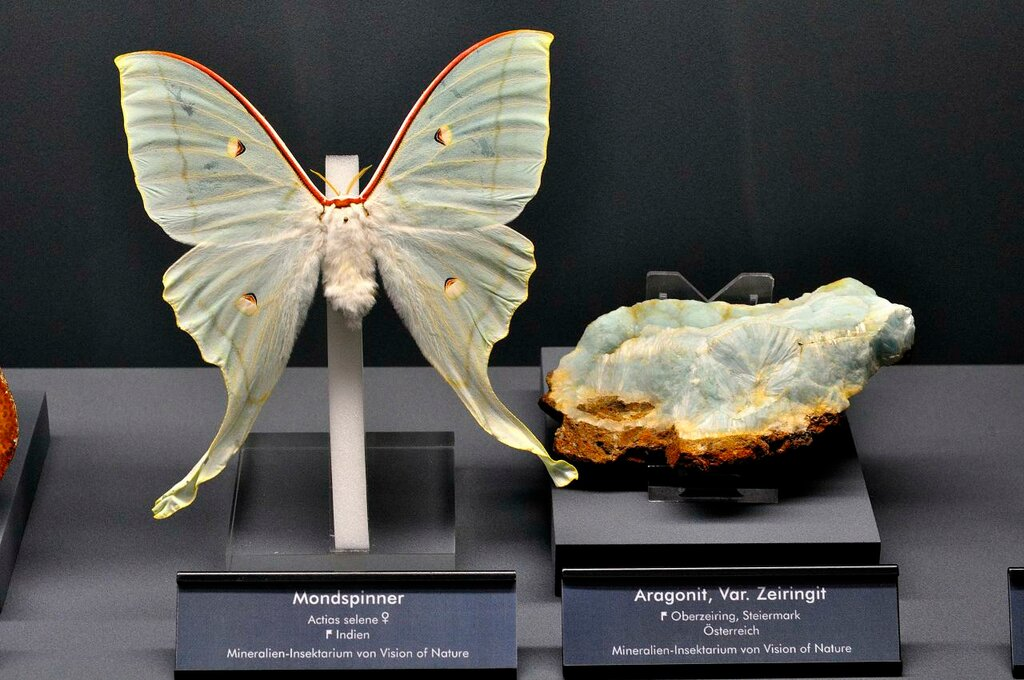 Aragonite and Butterfly.