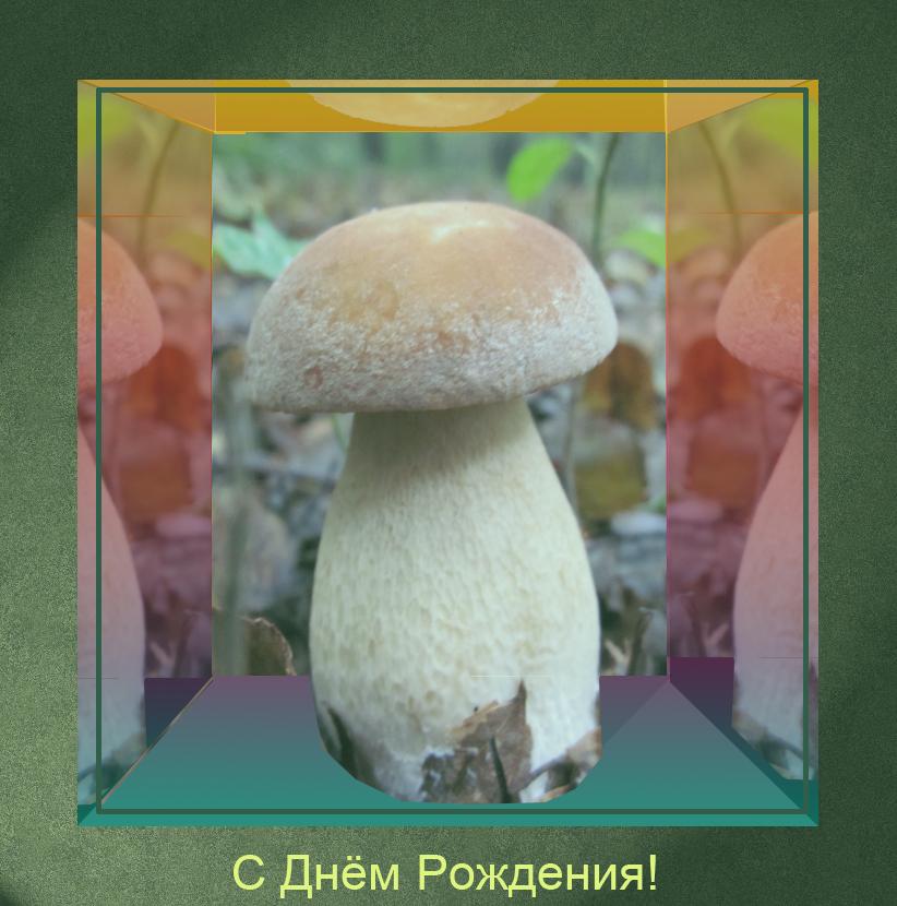 Поздравления с днем рождения грибнику
