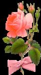 rosenrosa092.png