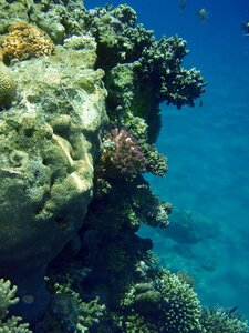 Подводный мир залива Акаба