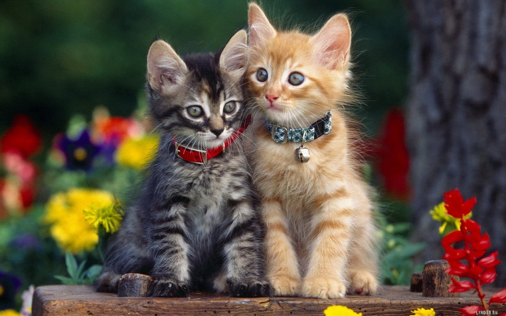 Коты и цветы