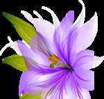 Beautiful Flowers5 [преобразованный].png