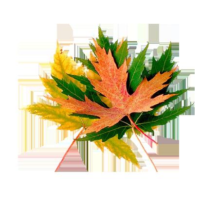 Осень, осенние кластеры и листья - векторный клипарт. Autumn ... | 418x450