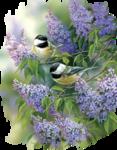 Птицы  разные  0_51c59_ff1e2ee0_S