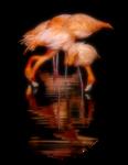 Птицы  разные  0_51c61_6947c9a8_S