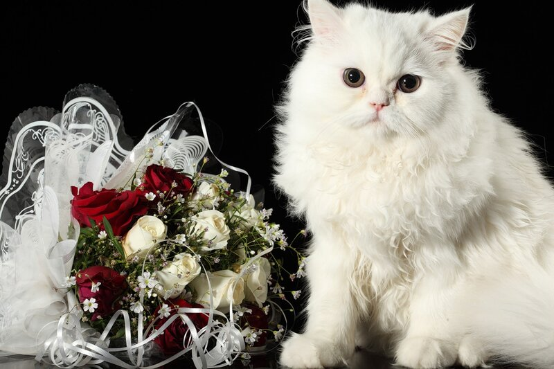 Кошки  0_52870_4d2ff789_XL