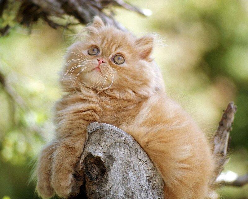 Кошки  0_52958_366416a0_XL