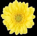 «ZIRCONIUMSCRAPS-HAPPY EASTER» 0_5417c_956f378d_S