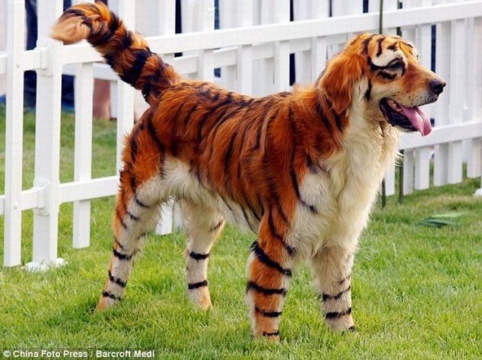 тигровая собака
